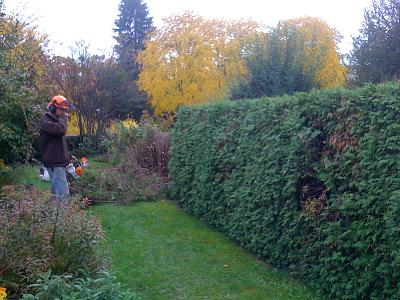 english-landscape-gardener-tree-surgeon-basel-zurich-joe-s-pics-439.jpg