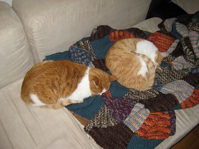 pets-sense-responsibility-cats.jpg