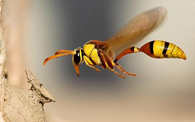 huge-wasp-image.jpg