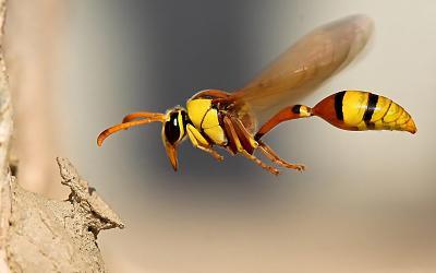 huge-wasp-image.jpg
