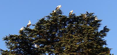 storks-returning-already-storks-trees.jpg