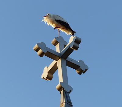 storks-returning-already-stork-cross.jpg