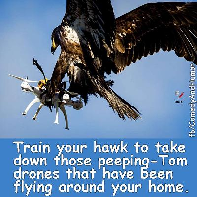 drones-law-birds-prey.jpg