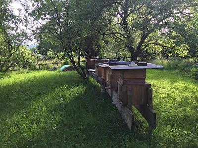 beekeepers-image1.jpg