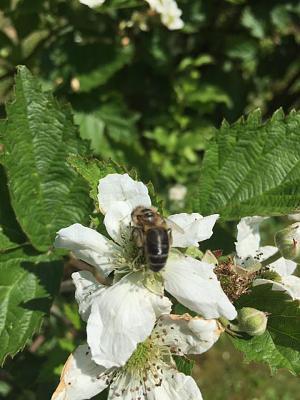 beekeepers-image3.jpg