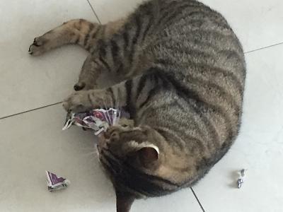 paper-shredding-image.jpg