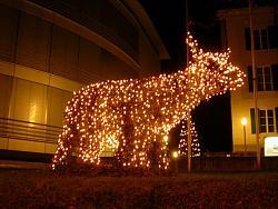 post-your-photos-switzerland-xmas-cow-2009.jpg