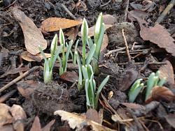 i-think-i-saw-heard-spring-today-dsc01652.jpg