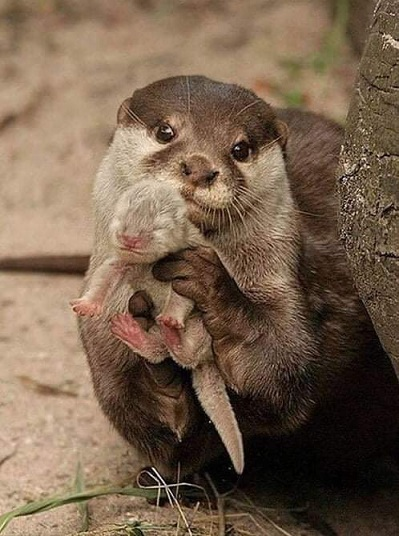 Name:  otter...jpg