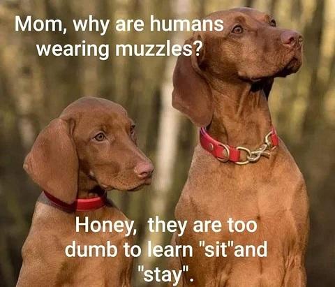 Name:  dogs...jpg Views: 17 Size:  75.9 KB