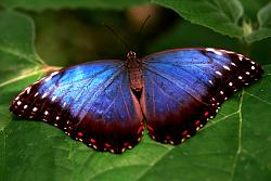 post-your-photos-switzerland-butterfly-1.jpg
