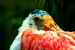 post-your-photos-switzerland-flamingo-1.1.jpg