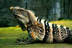 post-your-photos-switzerland-iguana-4.1.jpg