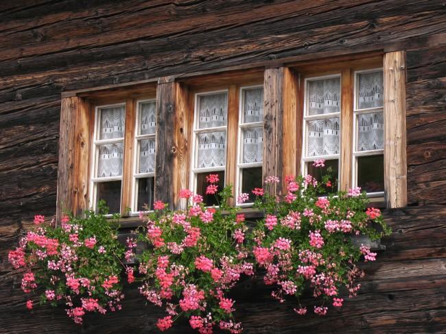 Winter Plant Care English Forum Switzerland