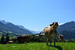 post-your-photos-switzerland-sch-pfheim-obstaldenegg-entlebuch-015.jpg