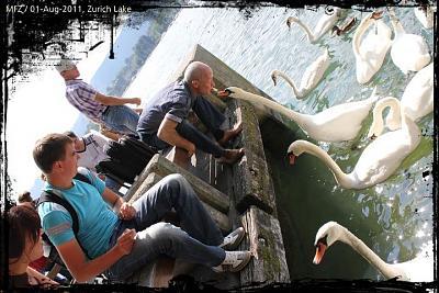 post-your-photos-switzerland-swan.jpg