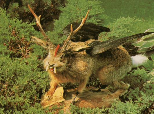 40651d1333049675-identifying-my-night-visitor-wolpertinger2.jpg