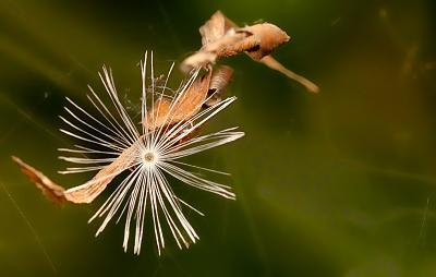 post-your-photos-switzerland-spicegarden5.jpg