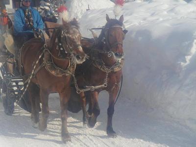 post-your-photos-switzerland-winter-horses.jpg