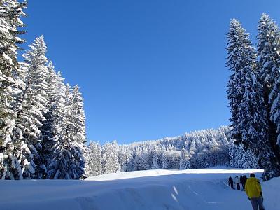 post-your-photos-switzerland-up-sledding-trail.jpg