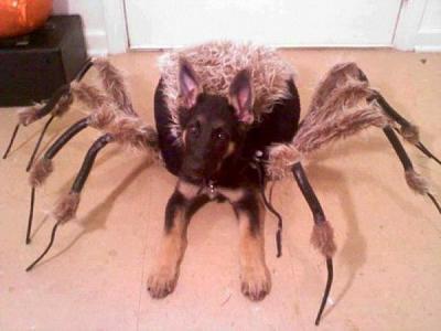 gigantic-spiders-switzerland-dog_spider.jpg