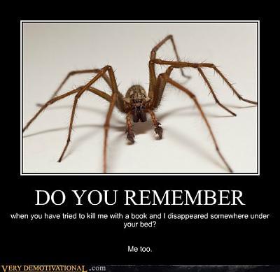 gigantic-spiders-switzerland-tumblr_lw7rzhoat81r6bn8jo1_500.jpg