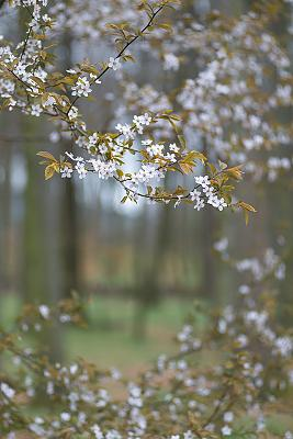 post-your-photos-switzerland-_pst1494.jpg