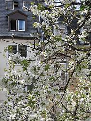 room-view-swiss-reality-img-cherrytree.jpg