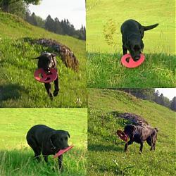 post-your-photos-switzerland-u-frisbee.jpg