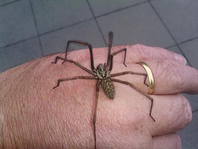 gigantic-spiders-switzerland-image.jpg
