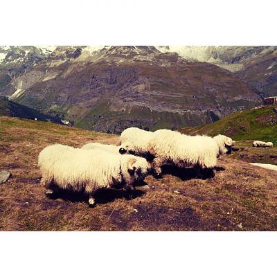 post-your-photos-switzerland-1085293_10152619692630628_1685727601_n.jpg