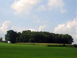 post-your-photos-switzerland-allmend-meadow-dscn5303.jpg