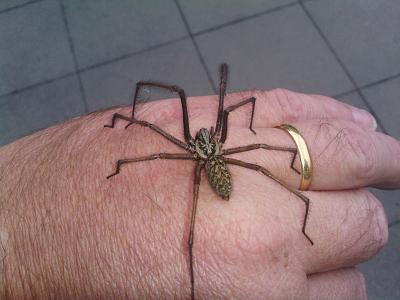 hallucinative-spider-bites-switzerland-image.jpg