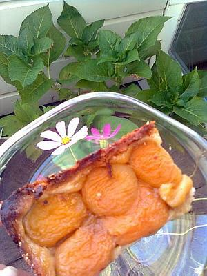 post-photos-what-you-cook-bake-switzerland-apricot-pie-2011-08-28-02.jpg
