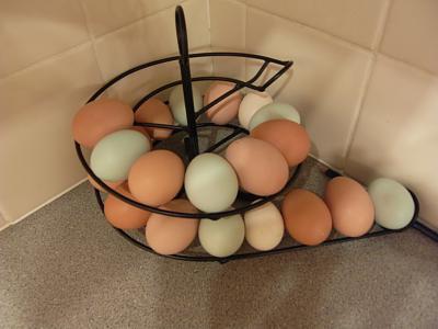 eggs-sdc14695.jpg