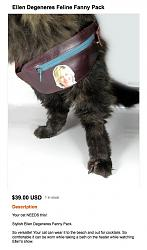 louis-vuitton-costly-kittypack.jpg