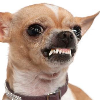 Name:  Angry-dog.jpeg Views: 267 Size:  15.9 KB