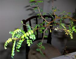 can-anyone-identify-plant-phpydwhxuam.jpg