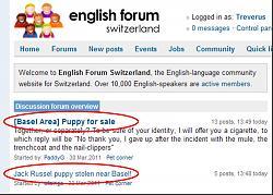 english-forum-quote-day-puppy.jpg