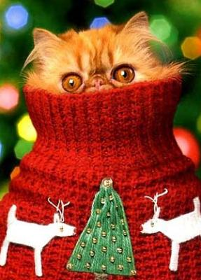 how-you-feeling-today-images-364cat-christmas.jpg