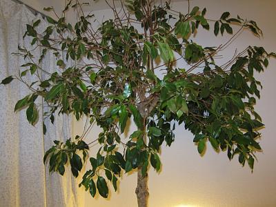 need-help-identifying-plant-img_3332.jpg
