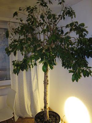 need-help-identifying-plant-img_3333.jpg