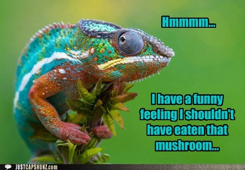How you feeling today images funny captions i have funny feeling i