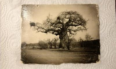 photography-discussion-thread-baobab.jpg