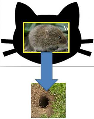 mice-garden-pet-safe-pest-control-volehole.jpg