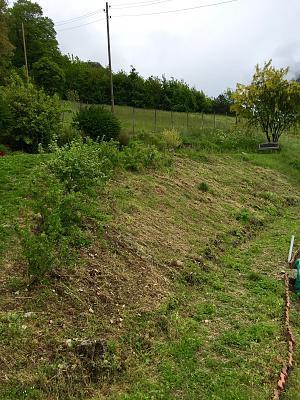 how-about-gardening-thread-img_0165.jpg