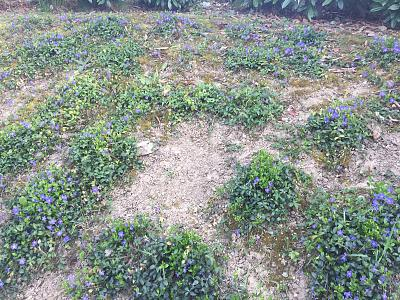 how-about-gardening-thread-img_1168.jpg