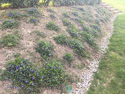 how-about-gardening-thread-img_1169.jpg
