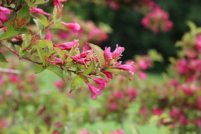 plant-identification-flower.jpg