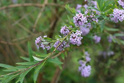 plant-identification-img_5383_opt.jpg